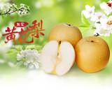 赵氏黄花梨纯天然特产5斤