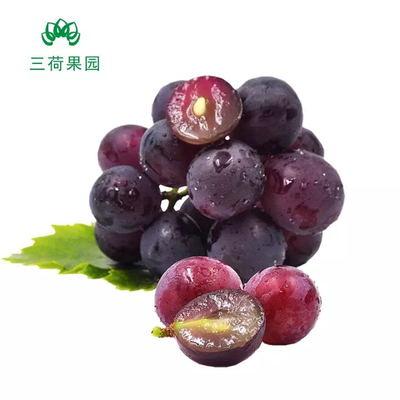 岳阳自然熟新鲜葡萄 (5斤)仅发岳阳2